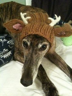 So sweet with his little antlers and long nose. I know a few dogs who would look very cute like this.