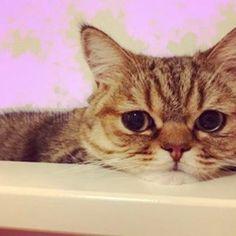 Have a good night babe❤️ おやすみなっきぃ💤 今日ライブおつカレーライス🍛 °C-uteちゃんが楽しい1日過ごせて幸せにゃ😊 #c_ute  #中島早貴 #なっきぃ  #おやすみなっきぃ  #ハロメン猫 #愛猫 #ルナ #るなっきぃ  #おつカレーライス  #goodnight #bedtime  #haveasweetdream  #cat #sleepingcat