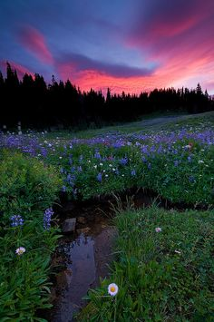 Mt. Rainier National Park, Washington USA