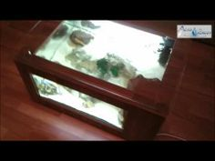 Coffee Table Aquarium Do It Yourself Kit