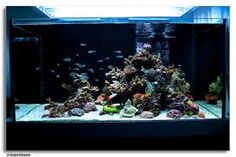 Image result for special reef scaping