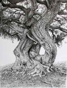 Ink Drawing Sarah Woolfenden's very detailed pen-and-ink drawings of trees near her home in North Devon are quite magical, Ink Pen Drawings, Drawing Sketches, Tree Drawings, Drawing Trees, Tree Trunk Drawing, Sketching, Grafic Design, Arte Black, Ink Illustrations
