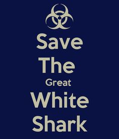 save-the-great-white-shark.png (600×700)
