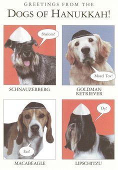 Dogs of Hanukkah!...omg