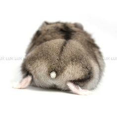Hamster butts are the big hipe in Japan! Fluffy Animals, Animals And Pets, Pretty Animals, Cute Animals, Cute Photos, Cute Pictures, Russian Dwarf Hamster, Hamster Care, Cute Hamsters