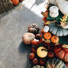 autumn, fall, and pumpkin image Autumn Aesthetic, Autumn Cozy, Fall Winter, Happy Fall Y'all, Autumn Photography, Hello Autumn, Fall Pumpkins, Autumn Inspiration, Fall Season