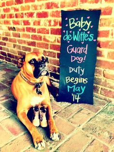 """35 Of The Most Creative Baby Announcements Ever - have it say """"promotion to nanny, effective xx/xx"""""""