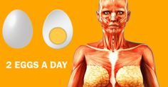 What Happens to Your Body When You Start Eating 2 Eggs a Day Health Benefits Of Eggs, Best Skin Care Routine, What Happened To You, 2 Eggs, Good Skin, Shit Happens, People, Vitamins, People Illustration