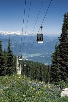 Summer in Whistler, Canada....favorite vacation spot...condo on the mountain...