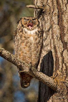 owlsstuff:  More irresistible owls here: http://ift.tt/JQ5da3 Photo source (http://ift.tt/1pocA7r)