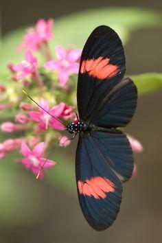 Follow the Beauty Butterfly