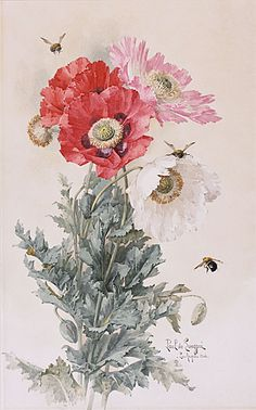 "Botanical art and bees; not honeybees, maybe Anthophora. ""Poppies And Bees""  Watercolor  c.1906 - Paul de Longpre"