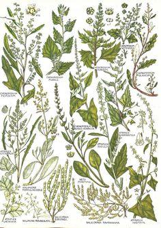 Vintage botanical print x