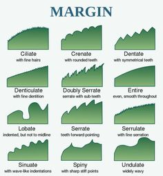 How to Identify Leaf Shape, Margin, and Venation: Leaf Margins