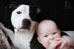 Baby and Staffordshire Terrier