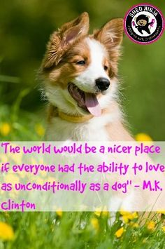 "The world would be a nicer place if everyone had the ability to love as unconditionally as a dog"" - M.K. Clinton"