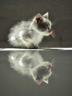 Little cat..