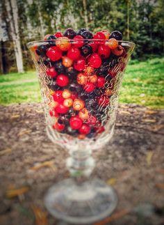 Viinimarjasekoitus: puna, valko ja musta