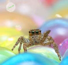 jUmpiNg SpiDer  by bug eye :)
