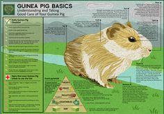 SPS Guinea Pig Guide