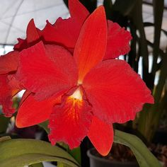 #flowers #flower #TagsForLikes #petal #petals #nature #beautiful #love #pretty #plants #blossom #sopretty #flowerstagram #flowersofinstagram #flowerslovers #flowerporn #botanical #floral #florals #insta_pick_blossom #flowermagic #instablooms #bloom #blooms #botanical #floweroftheday #orchid #orchids #orquídea #orquídeas #asorquideas