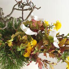 シンビジュームと照葉寒菊。