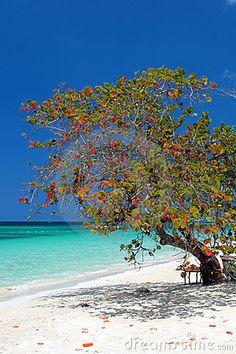 Seven Miles Beach, Negril, Jamaica