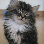 Nodding Kitten