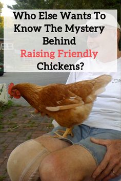 Free tutorial on How To Raise FRIENDLY Chickens, our suggestions and tips on raising chickens!!!