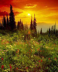 ✮ Mount Revelstoke National Park, British Columbia