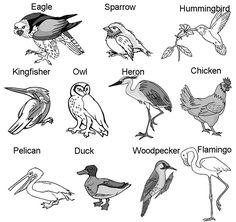 beaks to eats. A bird beak shape tells what it eats