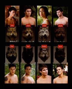 Twilight - Les quileutes !
