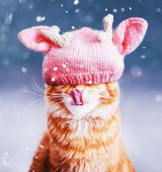 Um gatinho ruivo e o mundo pela frente: são esses os assuntos que a fotógrafa Kristina Makeeva mais gosta de clicar. Natural de Moscou, na Rússia, ela adora mostrar ao mundo as aventuras de seu gato Kotleta através do Instagram, onde já conta com mais de 12o mil seguidores.