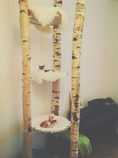 DIY CAT TREE  - BIRCH