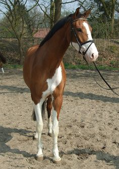 Would love a horse with these markings ;-)