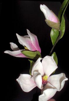 Magnolie z cukrové hmoty