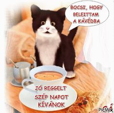 Good Night, Good Morning, Kitten, Thankful, Teddy Bear, Humor, Funny, Animals, Figurative