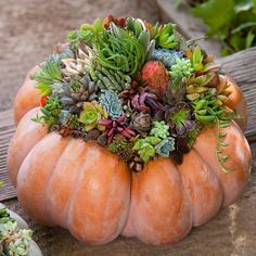 This pretty living arrangement comes together in minutes. Then, you can enjoy this unique display all season. Succulent Centerpieces, Pumpkin Centerpieces, Succulent Arrangements, Pumpkin Arrangements, Centerpiece Ideas, Pumpkin Display, Autumn Display, Fall Displays, Succulents In Containers
