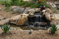 The Living Waterscapes retail store, Waterfall Wonderland, showcases a pond gallery, fish, plants, and premium pond products