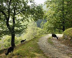 Sentiero del Castagno, Arosio Wanderland, Canton Ticino, Switzerland, Hiking, Country Roads, Wood Trellis, Arosa, Scenery, Walks