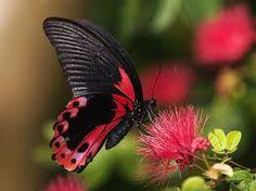 Afbeeldingsresultaat voor vlinders achtergrond