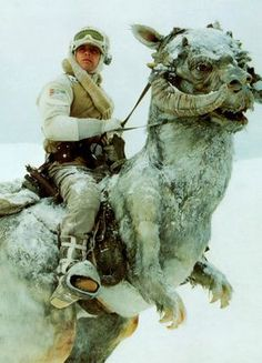 Luke Skywalker on his Tauntaun in The Empire Strikes Back Star Wars Fan Art, Star Wars Episoden, Luke Skywalker, Chewbacca, Stargate, Star Wars Brasil, Film Science Fiction, Star Wars Personajes, Star Wars Pictures