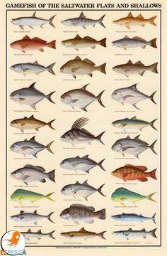 Infografías de peces 6
