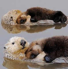 cute otter love