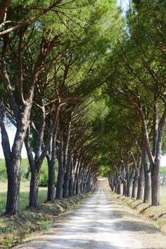 Maremma (Tuscany, Italy), Country Road.  I want this to be my driveway!