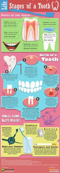 The life of a tooth