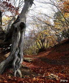 ΣΤΟ ΔΑΣΟΣ ΤΟΥ ΧΟΡΤΙΑΤΗ - HORTIATIS MOUNTAIN FOREST