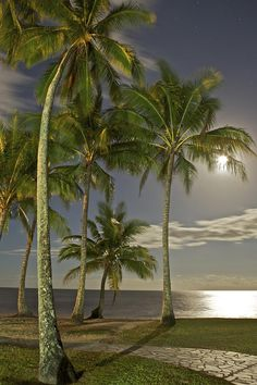 Moonlight over Palm Cove, Australia