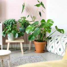 Help! Mijn planten worden te groot!