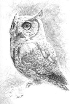 Find the desired and make your own gallery using pin. Drawn owl sketch - pin to your gallery. Explore what was found for the drawn owl sketch Cute Owl Drawing, Bird Pencil Drawing, Cool Pencil Drawings, Bird Drawings, Colorful Drawings, Animal Drawings, Pencil Art, Drawing Ideas, Animal Sketches